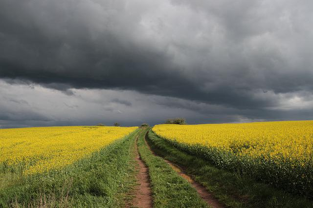 Spring, Field Of Rapeseeds, Clouds, Weather