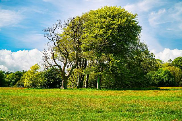 Trees, Tree, Grass, Field, Green, Outdoors, Nature