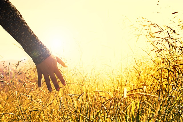 Meadow, Field, Sunset, Touching, Peace, Tranquility