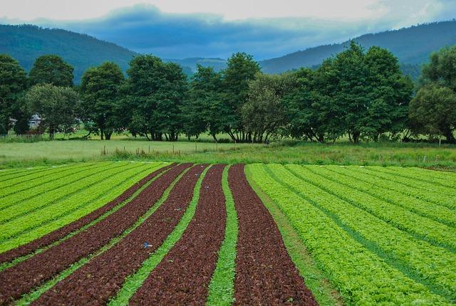 Field, Landscape, Farm, Nature, Plant, Lawn, Soil