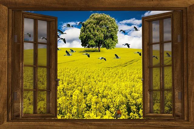 Nature, Oilseed Rape, Landscape, Field, Rape Blossom