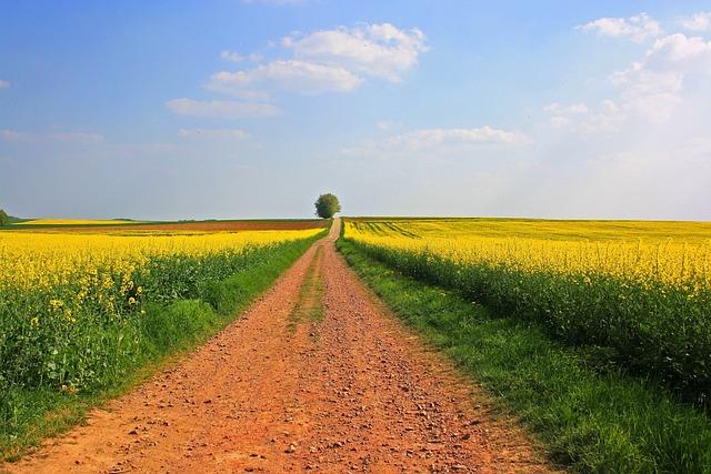 Field, Agriculture, Landscape, Sky, Farm, Nature, Rural