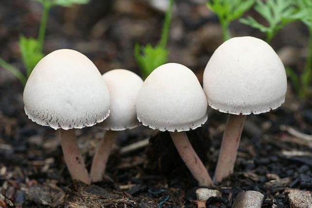 Mushrooms, Garden, Salads, Nature, Field, Hats