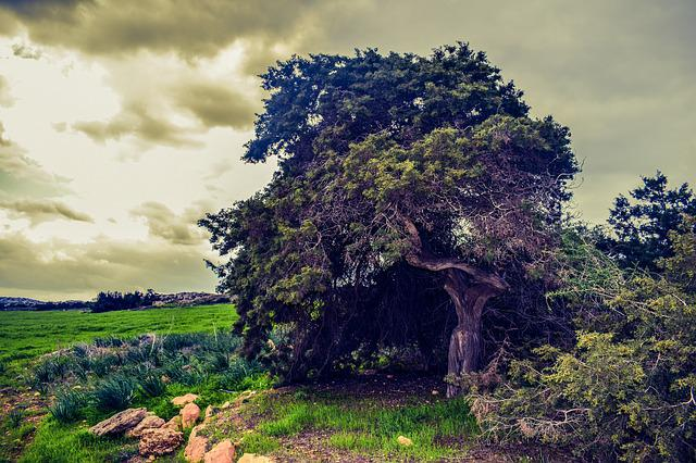 Tree, Meadow, Landscape, Nature, Green, Field, Storm