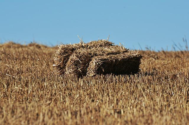 Straw Bales, Straw, Stubble, Field, Agriculture, Sky