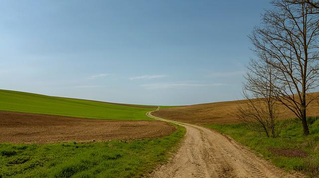 Path, Field, Fields, Lane, Nature, Tree, Grass