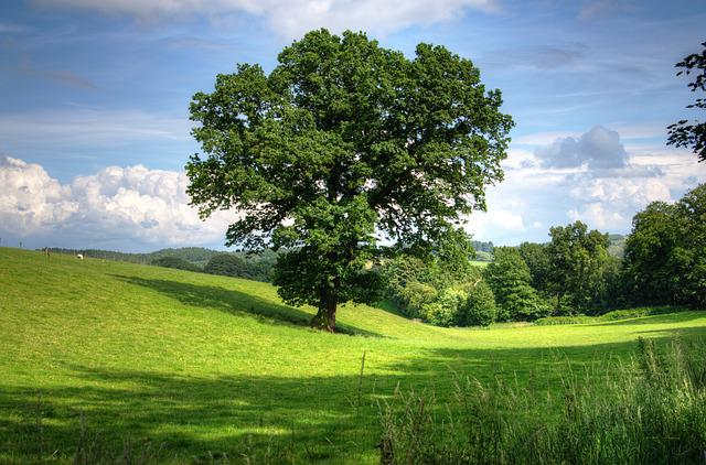 Tree, Oak, Landscape, View, Field, Scenic, Countryside