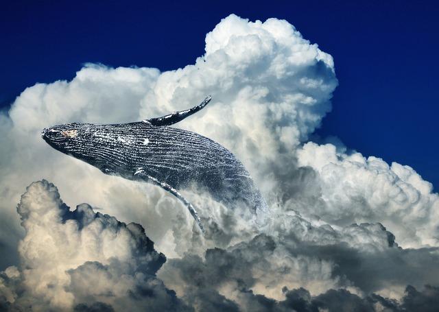 Wal, Clouds, Jump, Humpback Whale, Fin Whale, Ocean