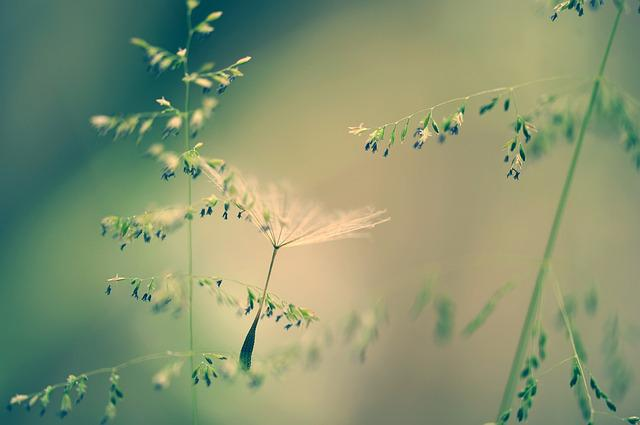 Nature, Grass, Seeds, Dandelion, Tender, Fine, Meadow