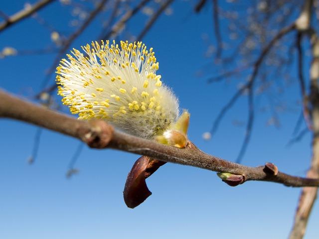 Maňúsky, It's, The Sky, Spring, Tree, A Branch, Finesse
