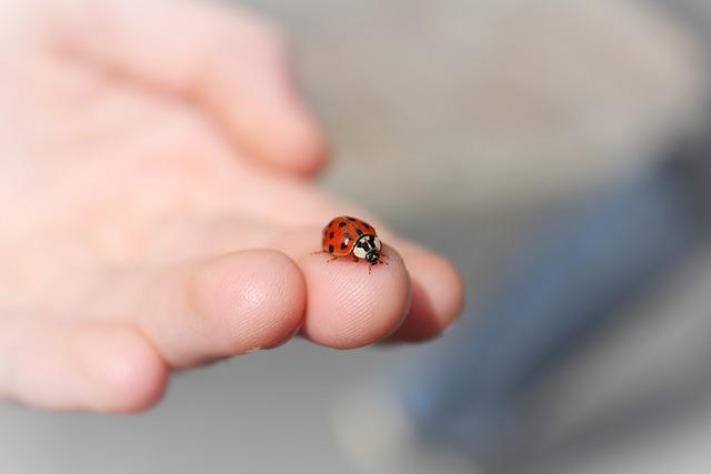 Ladybug, Hand, Finger