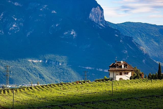 Vineyard, Wine, Winegrowing, Finka, Italy, Mediteran