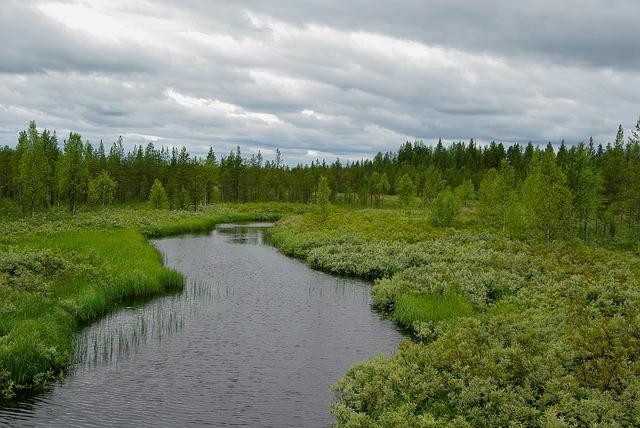 Finland, Forest, Taiga, Lapland, Lichen