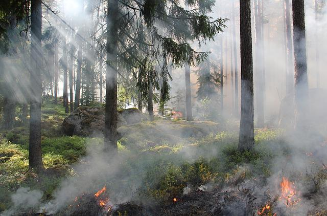 Styggkärret, Reserve, Burning, Fire, Smoke