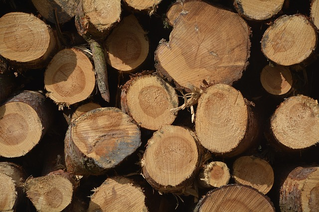 Firewood, Section, Tribe, Holzstapel