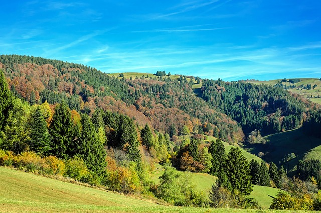 Black Forest, Forest, Firs, Deciduous Trees, Leaves