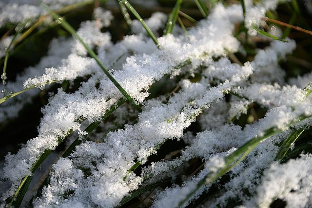 Snow, Blades Of Grass, First Snow, Coldsnap