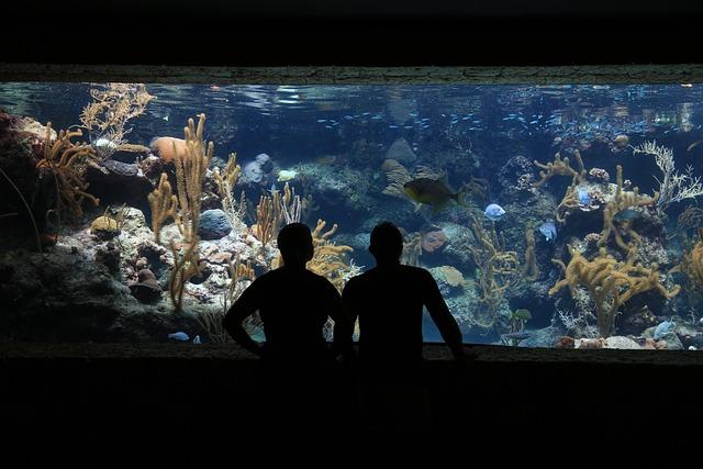 Aquarium, Fish, Submarine, Water, Silhouettes Of People