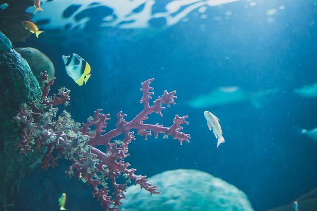 Ocean, Fish, Coral