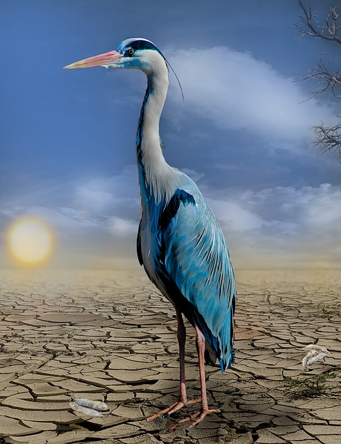 Heron, Fish, Drought, Hunger, Dehydrated, Heat, Cracked