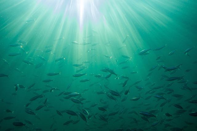 Sea, Background, Ocean, Waters, Nature, Fish, Tropical