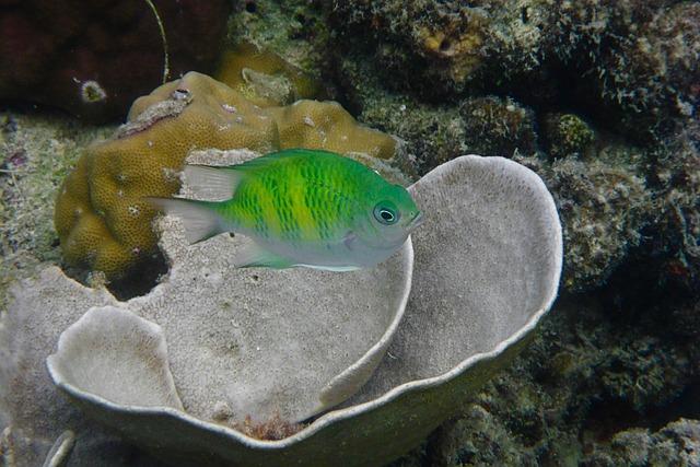 Philippines, El Nido, Fish