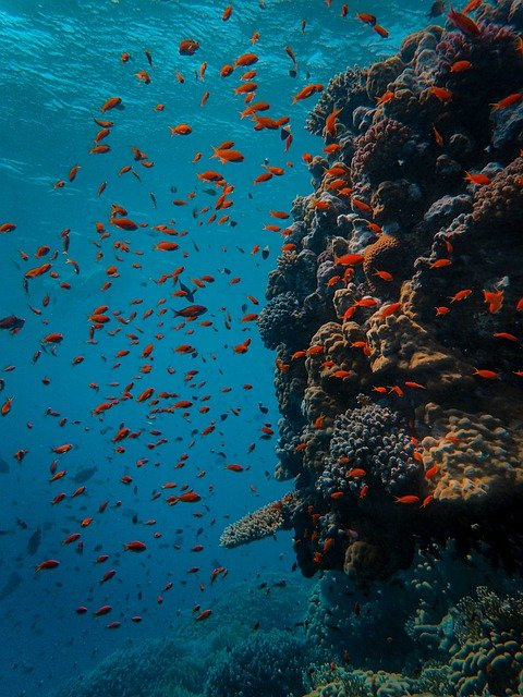 Underwater, Coral, Fish, Sea, Reef, Ocean, Diving