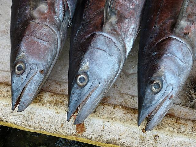 Fish, Seafood, Fischer, Eat, Food, Meal, Market