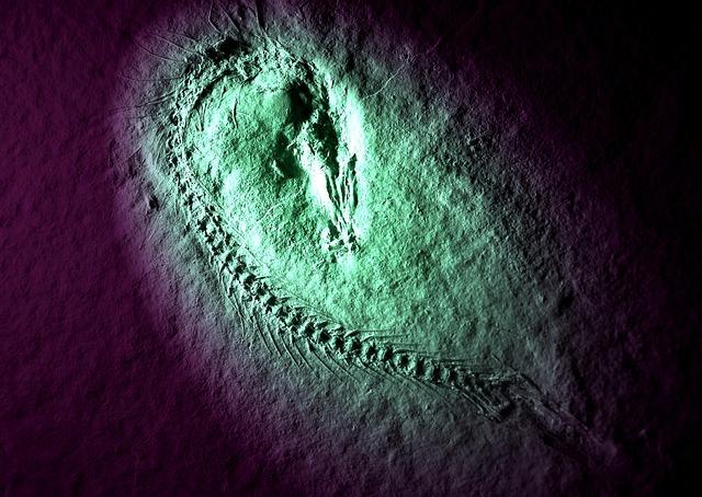 Fossil, Fish, Solnhofen, Feathered, Petrification, Dead