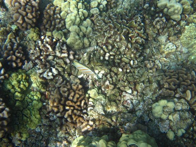 Fish, Hawaii, Volcanic, Reef, Sea, Marine, Underwater