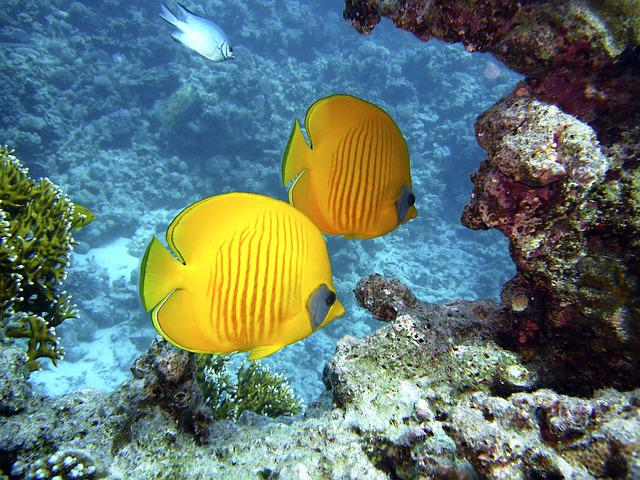 Diving, Underwater, Water, Underwater World, Fish