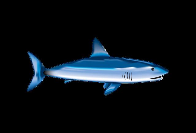 Fish, Shark, Sea, Underwater, Nature, Aquatic, Wild