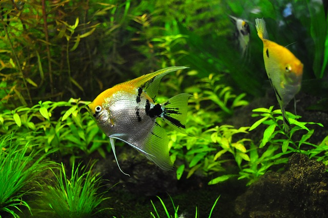 Fish, Tank, Aqua, Decorative, Zoo, World, Aquatic, Pet
