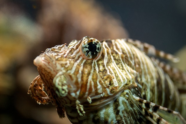 Fish, Marine, Nature, Sea Creatures, Fisherman
