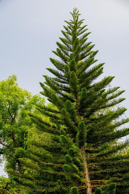 Free photo Fisheye View Bangalore Conifer - Max Pixel