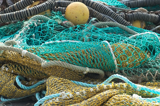Fishing Nets, Fish, Meshes Of Nets, Fishing