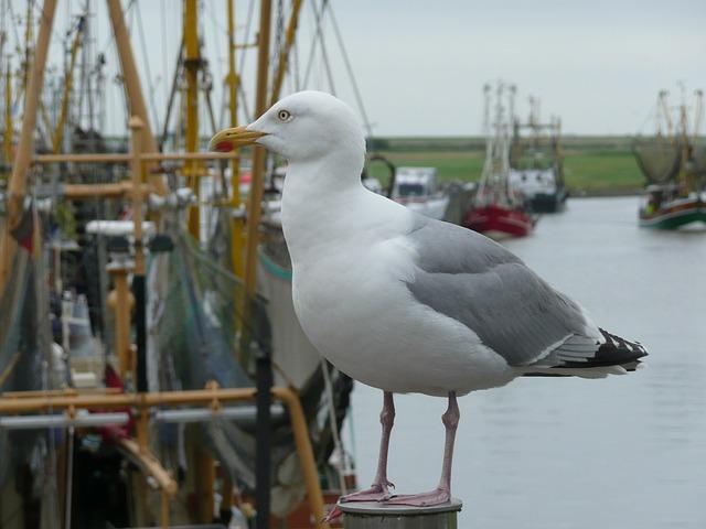 Seagull, Bird, Port, Fishing Port, Cutter