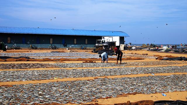 Village, Fishing Village, Sorting, Fish, Drying