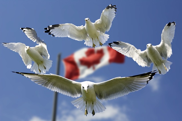 Gulls, Formation, Flag, Sky, Blue, Flags, Color