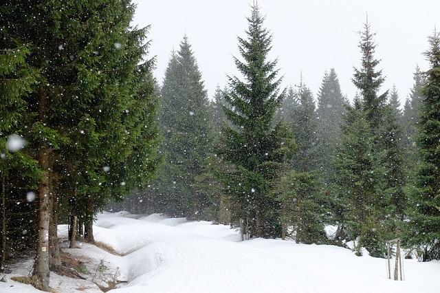 Jizerka, Snow, Snowing, Spruces, Winter, Frost, Flakes