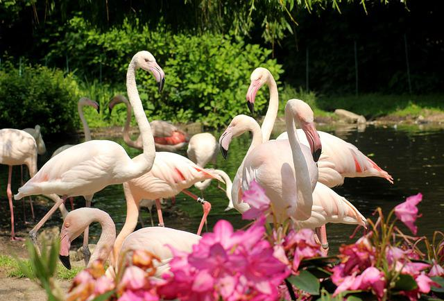 Flaming, Birds, Flamingos, Bird, Colored, Nature