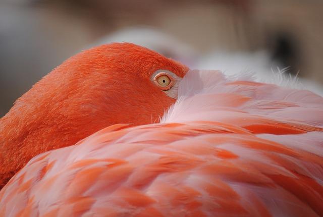 Flamingo, Bird, Birds, Pink, Feather, Exotic, Nature