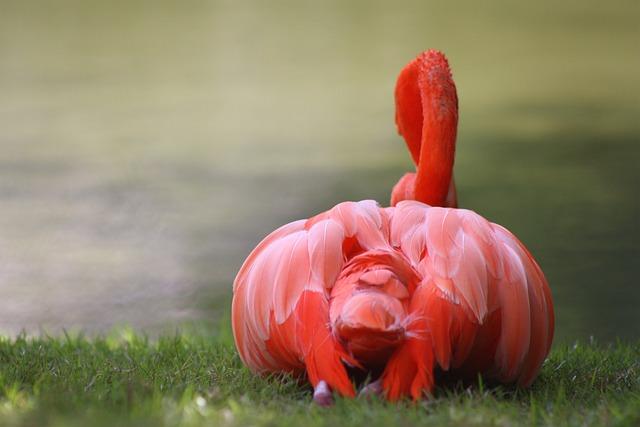 Nature, Flamingo, Caribbean