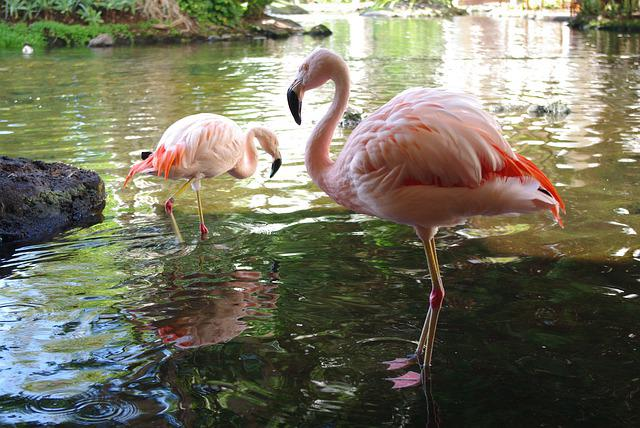 Pool, Bird, Nature, Water, Wildlife, Flamingo, Wild