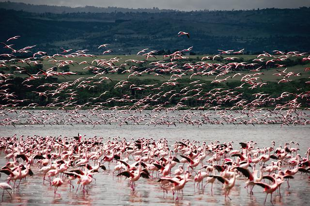 Bird, Flamingo, Animal, Nature, Africa, Safari, Lacquer