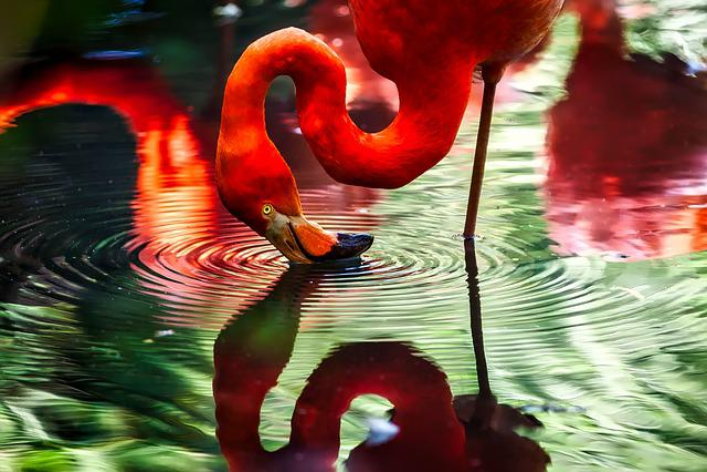 Flamingo, Bird, Macro, Closeup, Hdr, Pond, Lake, Water