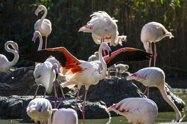 Flamingo, Vienna, Schönbrunn, Animal, Zoo, Tiergarten