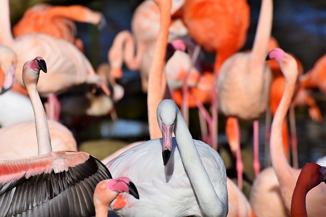 Flamingo, White Flamingo, Bird, Pink, Bill, Plumage