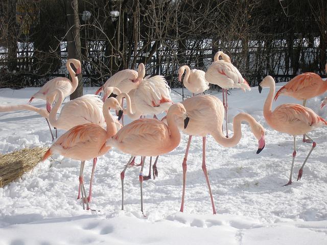 Flamingos, Birds, Zoo