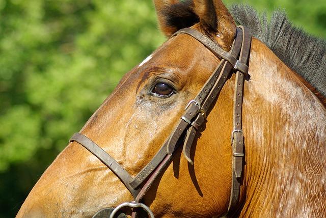 Horse, Flange, Horseback Riding, Dressage